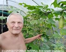 отзыв от покупателя теплицы ЗАВОДА ГОТОВЫХ ТЕПЛИЦ (Василий. г. Белгород)